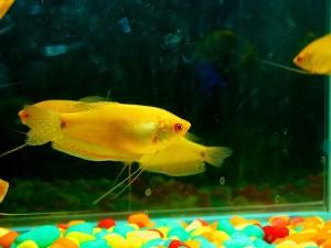 fish-390747_640
