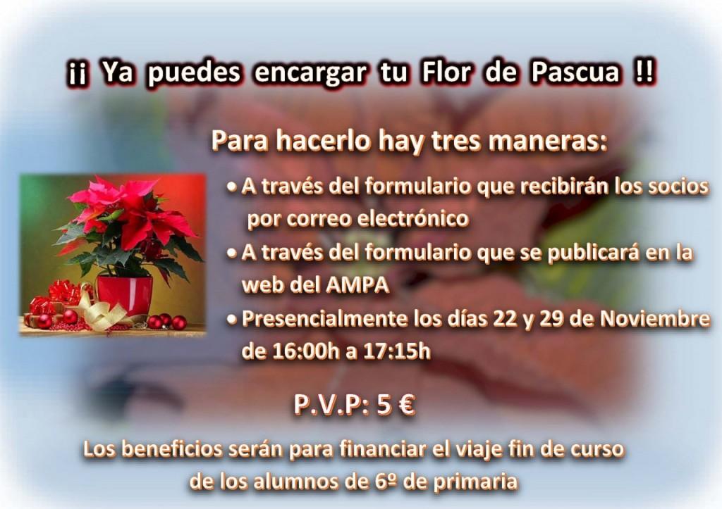 flor-pascua-cartel